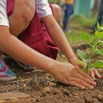 Conoce cómo enseñarle a tus hijos a cuidar el medio ambiente